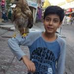 Hamza Syed Profile Picture